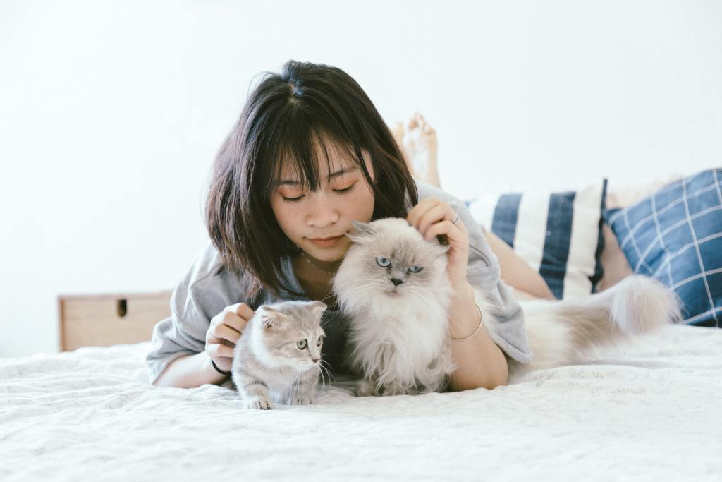 Image of a human playing with cats in the blog on 10 things to remember before you adopt a cat