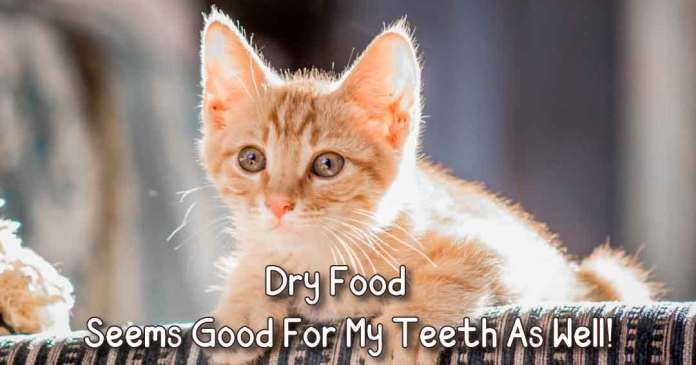 dry food, seems good for my teeth as  well