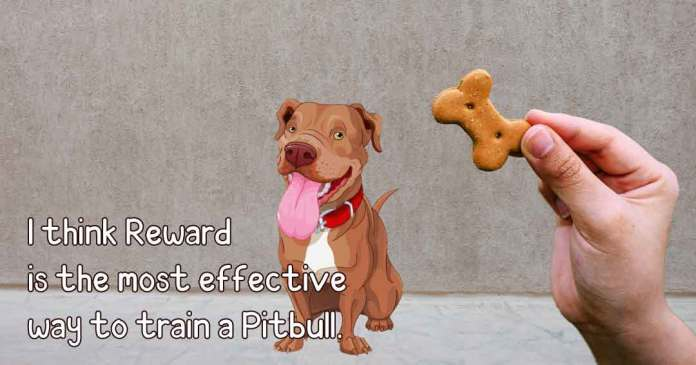 i think reward is most effective way to train a pitbull