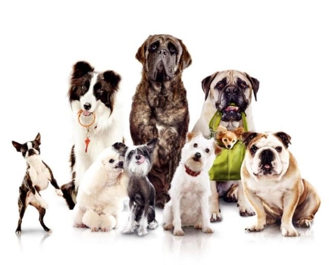 Different dog breed classification for cremation