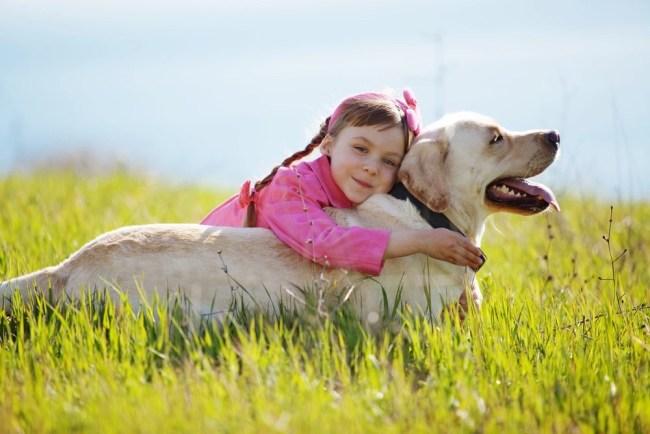 Pet Bereavement Guide Primary School Children