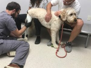 What Happens During An Evaluation Appointment At My Pet's Brace? 1