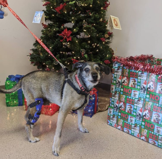 Keeping Pets Safe During Holiday Celebrations 1