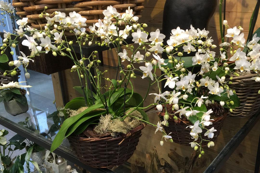Wohnzimmer Vorhang Orchidee  parsvendingcom