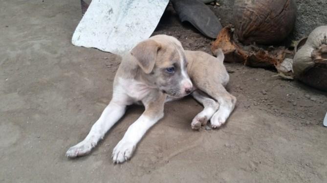 Animal Tiger Pup 2
