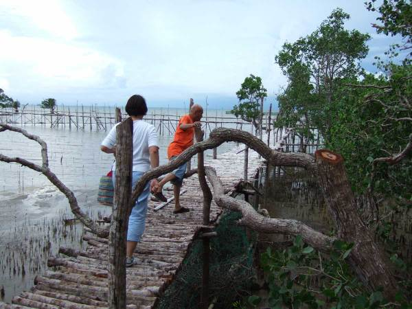 Elevated walkway into mangrove project, Guimaras Island, Philippines