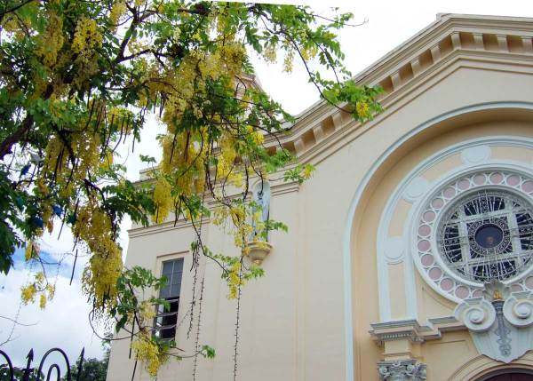 Silay's Church of San Diego, Golden Shower Tree Designed by Italian architect Verasconi and built in 1925.