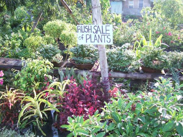 Villa is renowned as a place to grow and buy plants, shurbs and trees because of its loamy soil