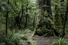 mpyh_2017_new-zealand_cascade-creek_0006