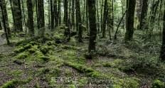 mpyh_2017_new-zealand_cascade-creek_0012