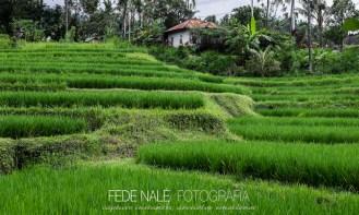 MPYH_2017_Indonesia_Bali_Secret Gardens_0021