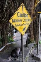MPYH_2017_Indonesia_Ubud_Monkey Forest_0001