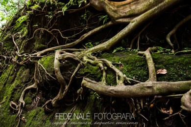 MPYH_2017_Indonesia_Ubud_Monkey Forest_0011