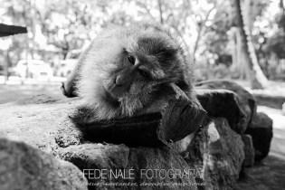 MPYH_2017_Indonesia_Ubud_Monkey Forest_0019