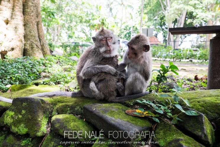 MPYH_2017_Indonesia_Ubud_Monkey Forest_0021