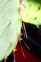 Cactus Spines 2