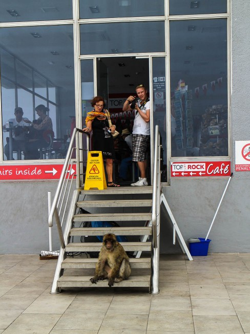 Ape in front of shop