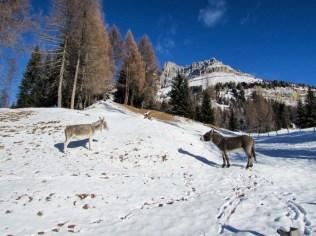 Rosengartenspitze Esel (1 von 1)