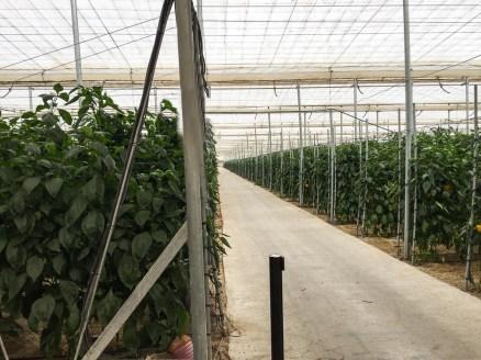 plantagen zoi