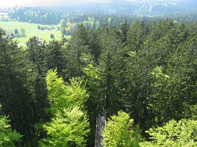 Baumwipfelpfad Bayerischer Wald4