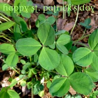Shamrocks and Artichokes … Happy St. Patrick's Day!