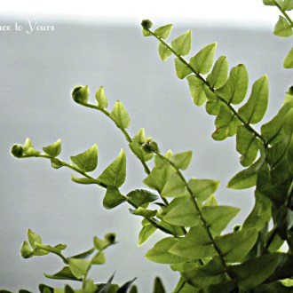 Are Your Hanging Ferns the Envy of the Neighborhood? They can be!