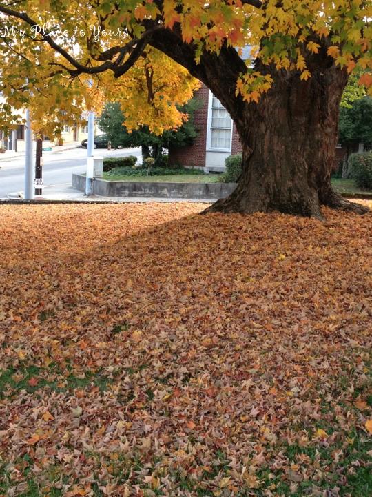 Autumn Girl 1