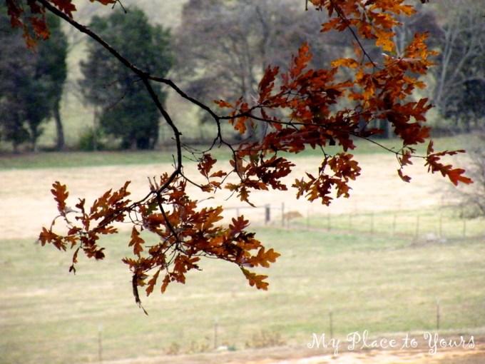 TN Autumn07