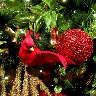 Cardinal Song:  A Christmas Theme