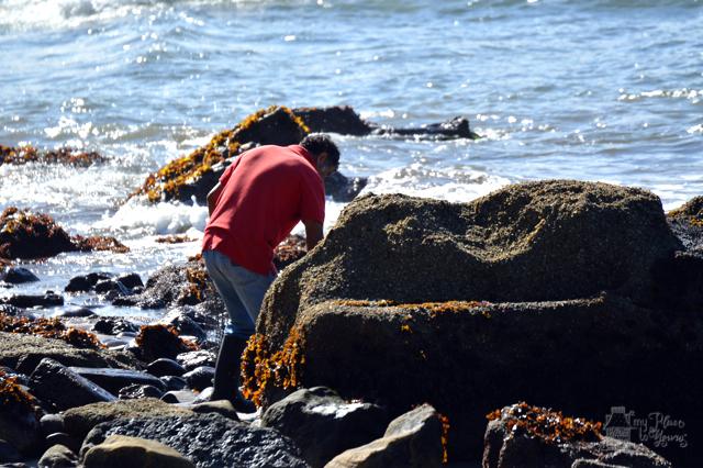 Chilean seaweed fisherman