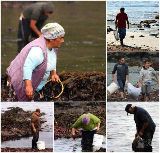 seaweed fishermen