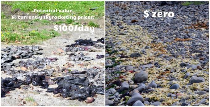seaweed prices