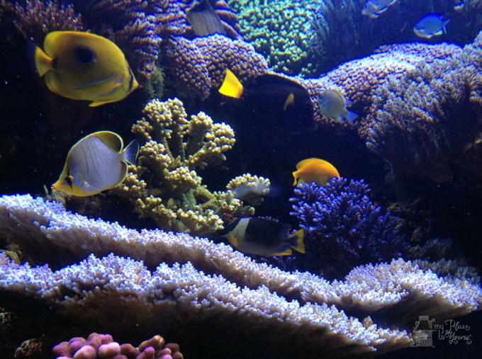 Denver Aquarium - 7