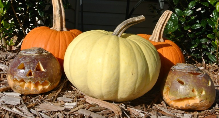 Three pumpkins and two carved turnips.
