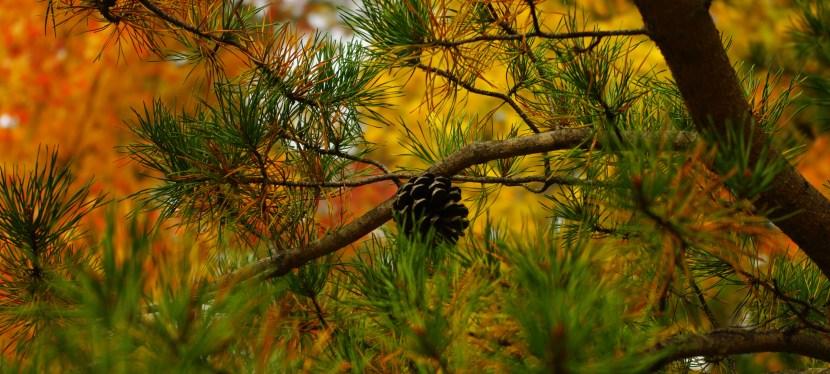"""""""Autumn Fires"""", by Robert Louis Stevenson"""