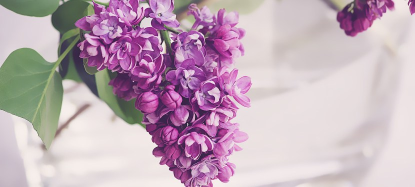 """O Were My Love Yon Lilac Fair"": A Poem by Robert Burns"
