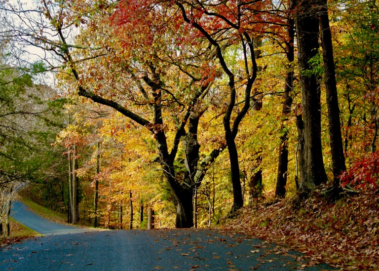 A country road and trees in fall color.