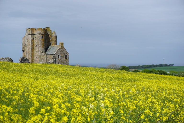 Inchdrewer Castle behind a field of bright yellow rapeseed.