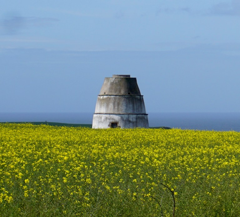 Findlater Doocot in a field of yellow flowers.