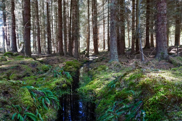 A boggy, mossy forest floor.