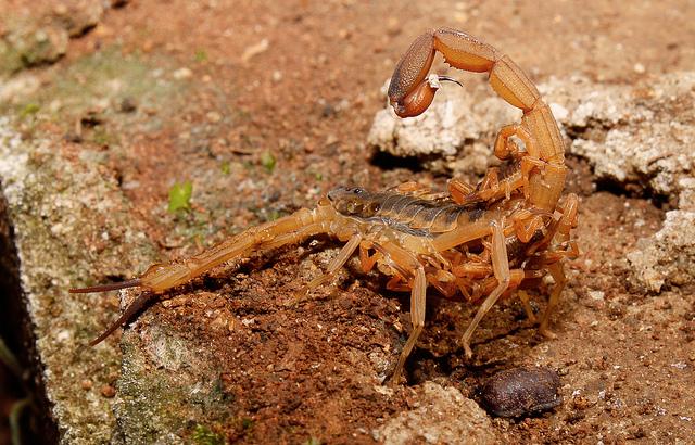 Skorpió emelkedő randevúk társkereső san antonio texas