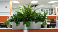Call Center Cubicle Top Indoor Planter Boxes - Plantopia ...