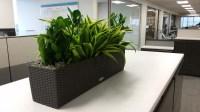 Interior Plants for Credit Union - Plantopia - Interior ...