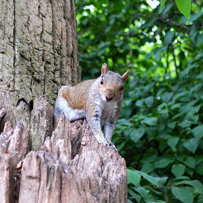 Spot the squirrels in Greenwich - mypoppet.com.au