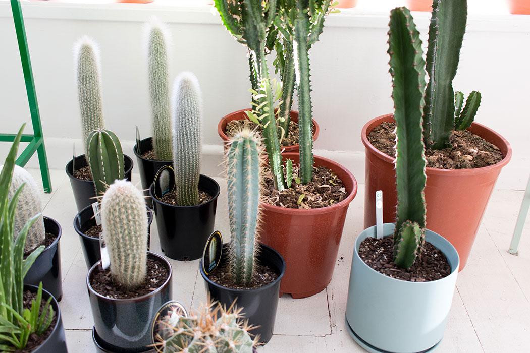 Cool Cactus - plant gift shop armadale