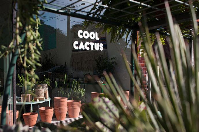 Cool Cactus plant store Armadale Melbourne - mypoppet.com.au