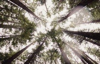 Redwood Forest, Warburton Vic. Mypoppet.com.au