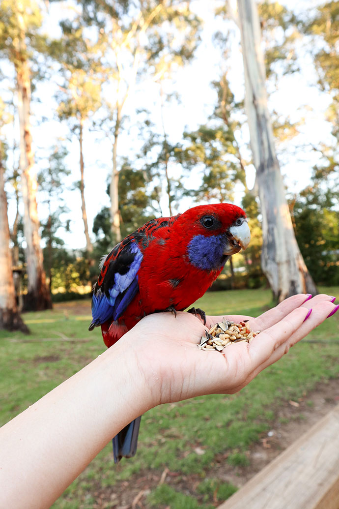 Bird life Yarra Valley