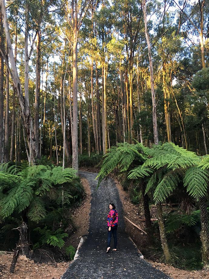 Yarra valley fen walk - mypoppet.com.au