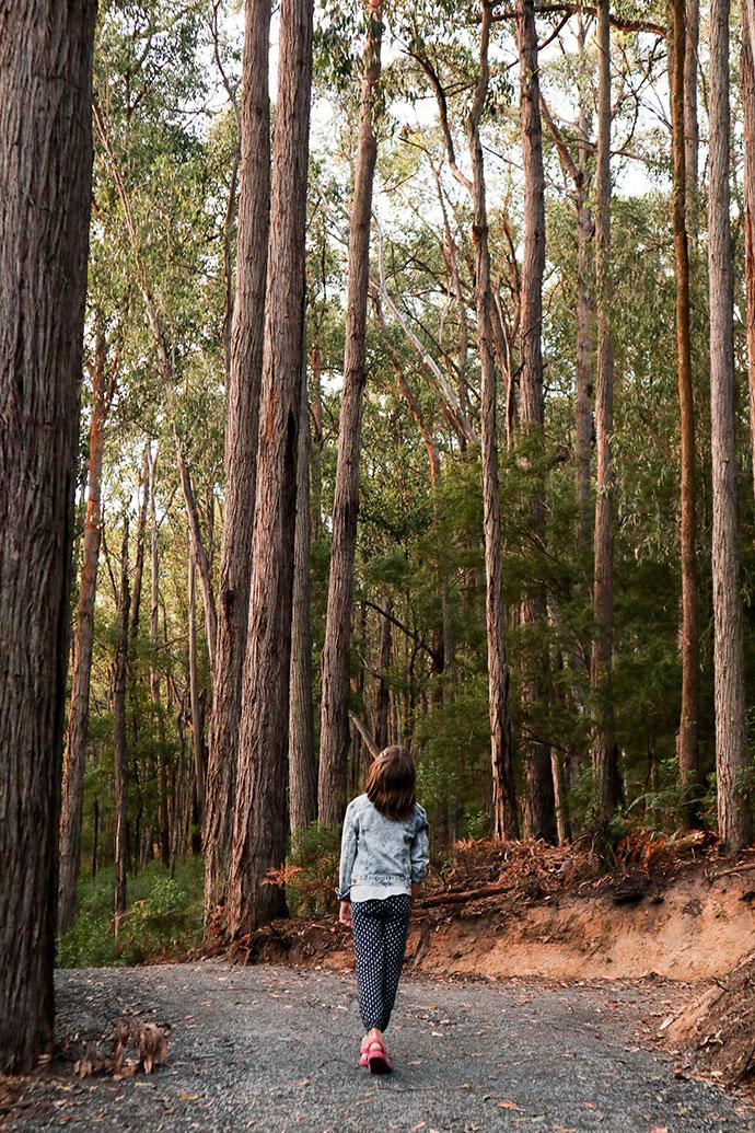 Lake Piccaninny Yarra valley fern walk - mypoppet.com.au
